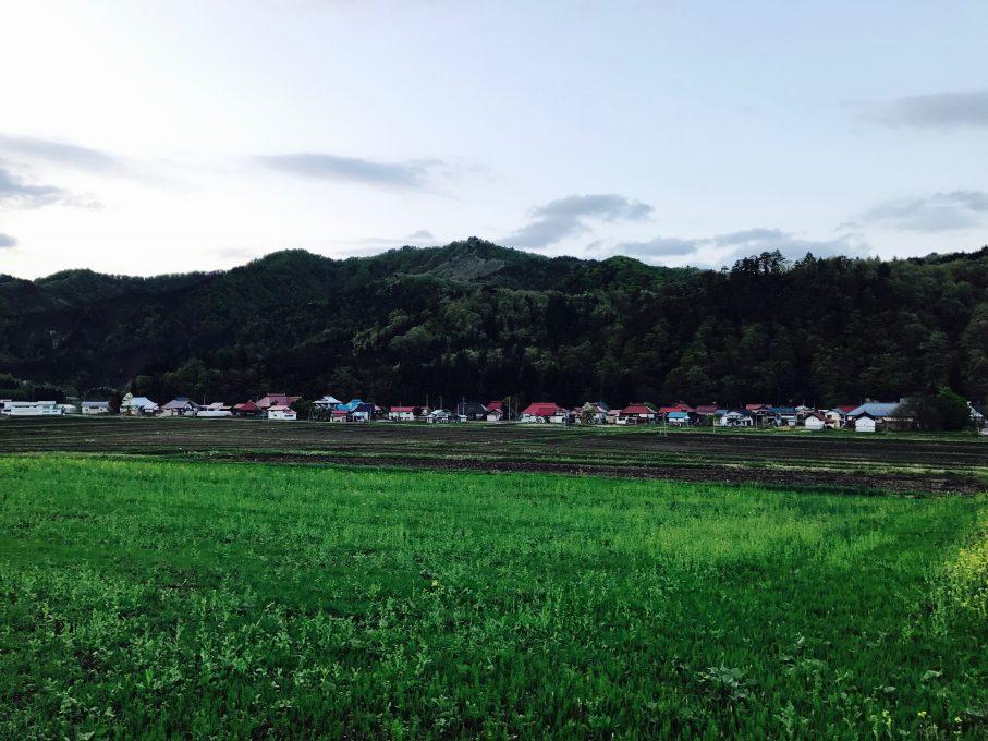昭和村野尻地区菜の花畑エリア