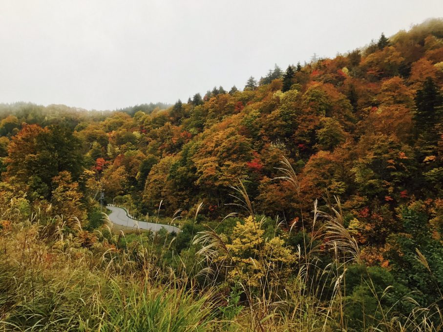 紅葉の峠道