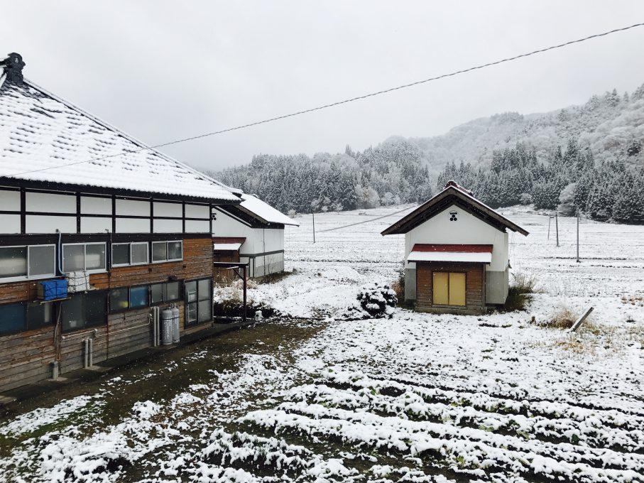 昭和村野尻地区の雪