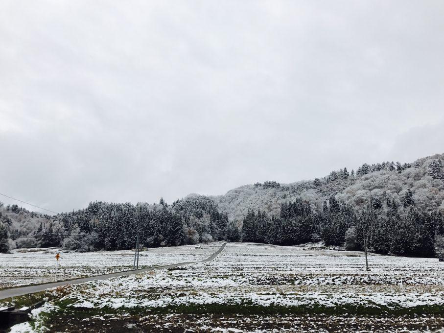 昭和村の雪