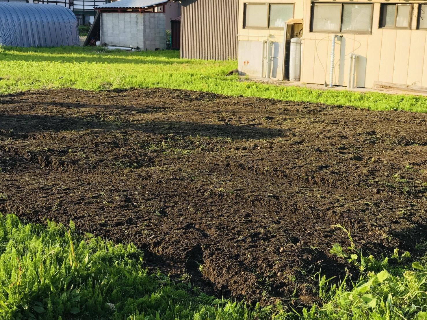 苦土石灰を畑に撒く