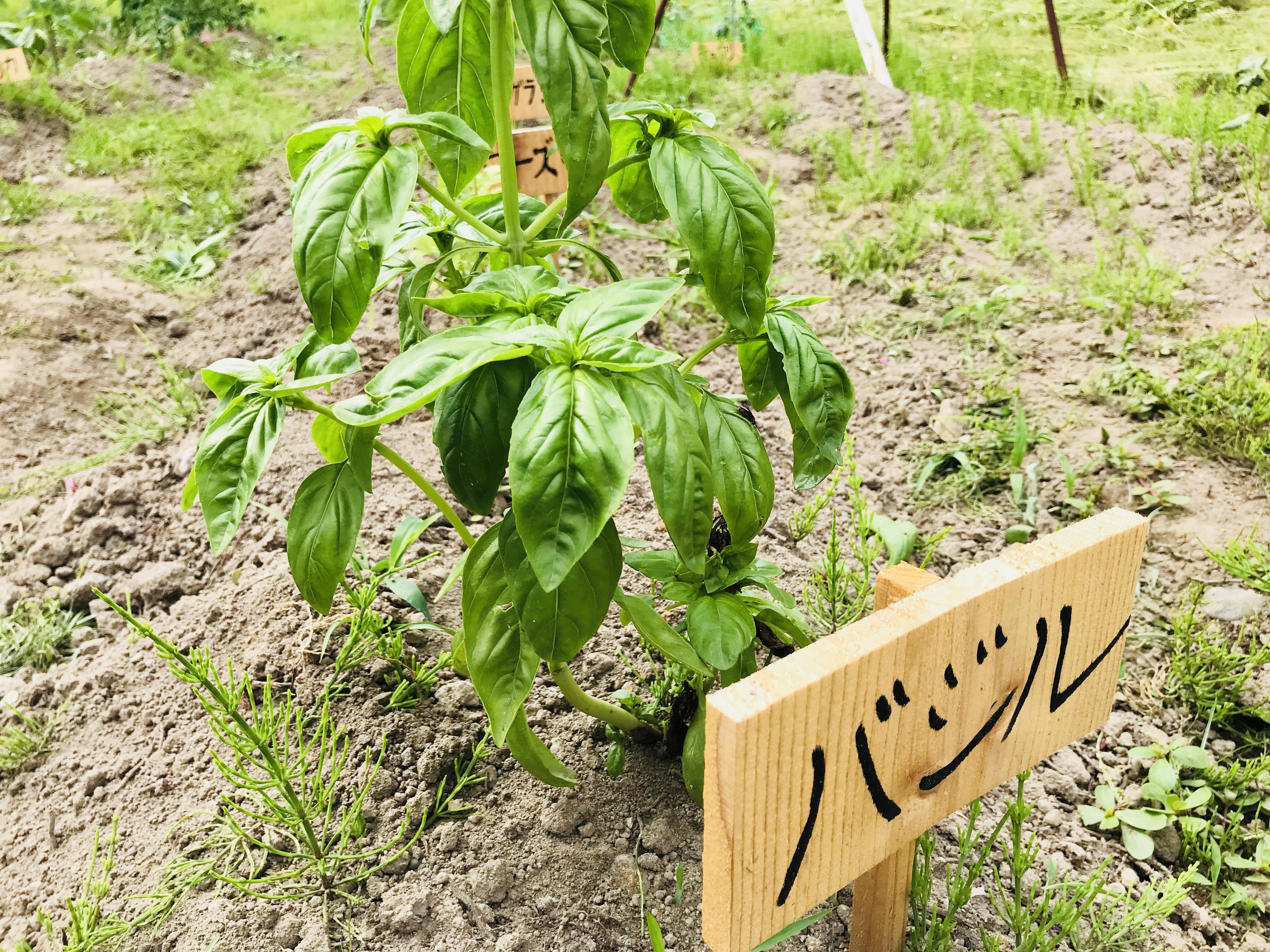 SHARE BASEの野菜収穫体験