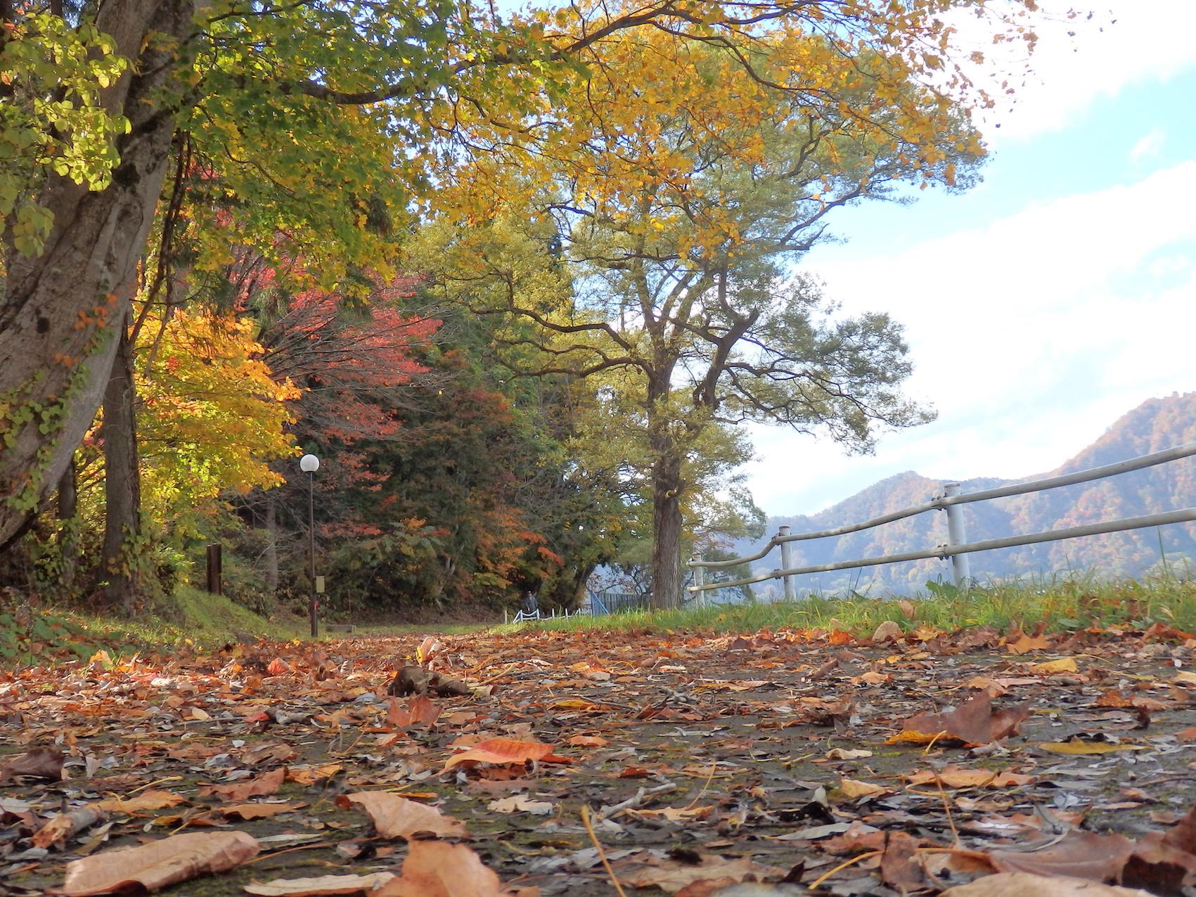 沼沢湖の紅葉