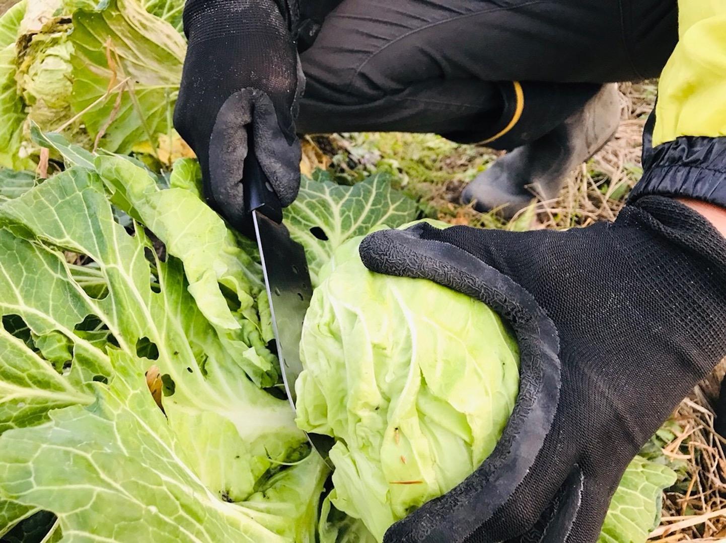 野菜づくり 初めて