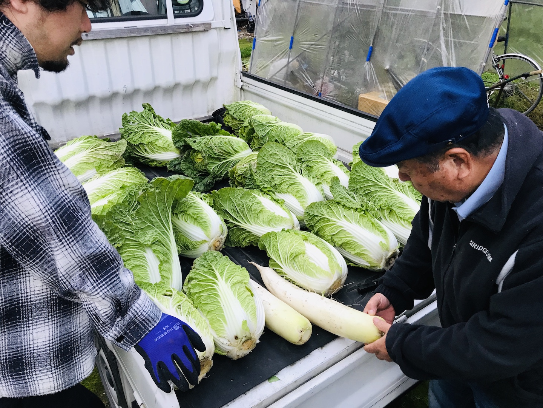 白菜の収穫 鍋 レシピ
