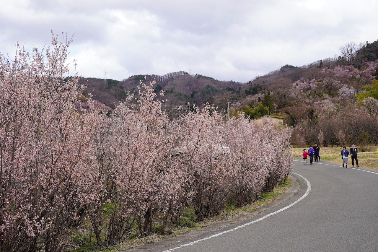 東北の花見スポット