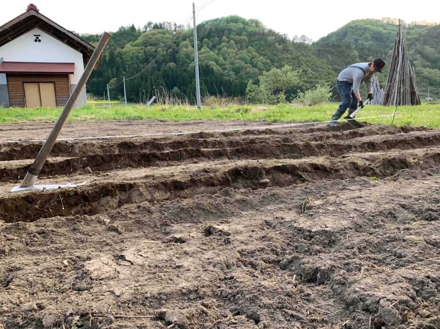 ジャガイモを植える