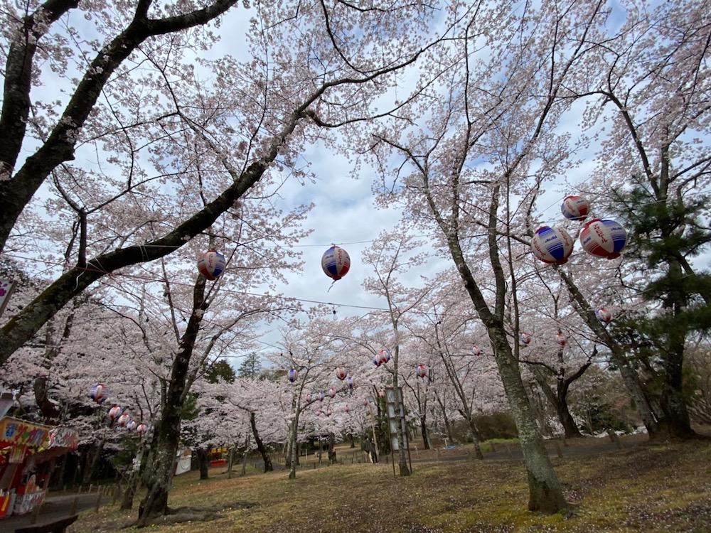 茨城県水戸市の桜山