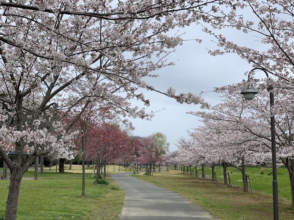 水戸市の桜スポット