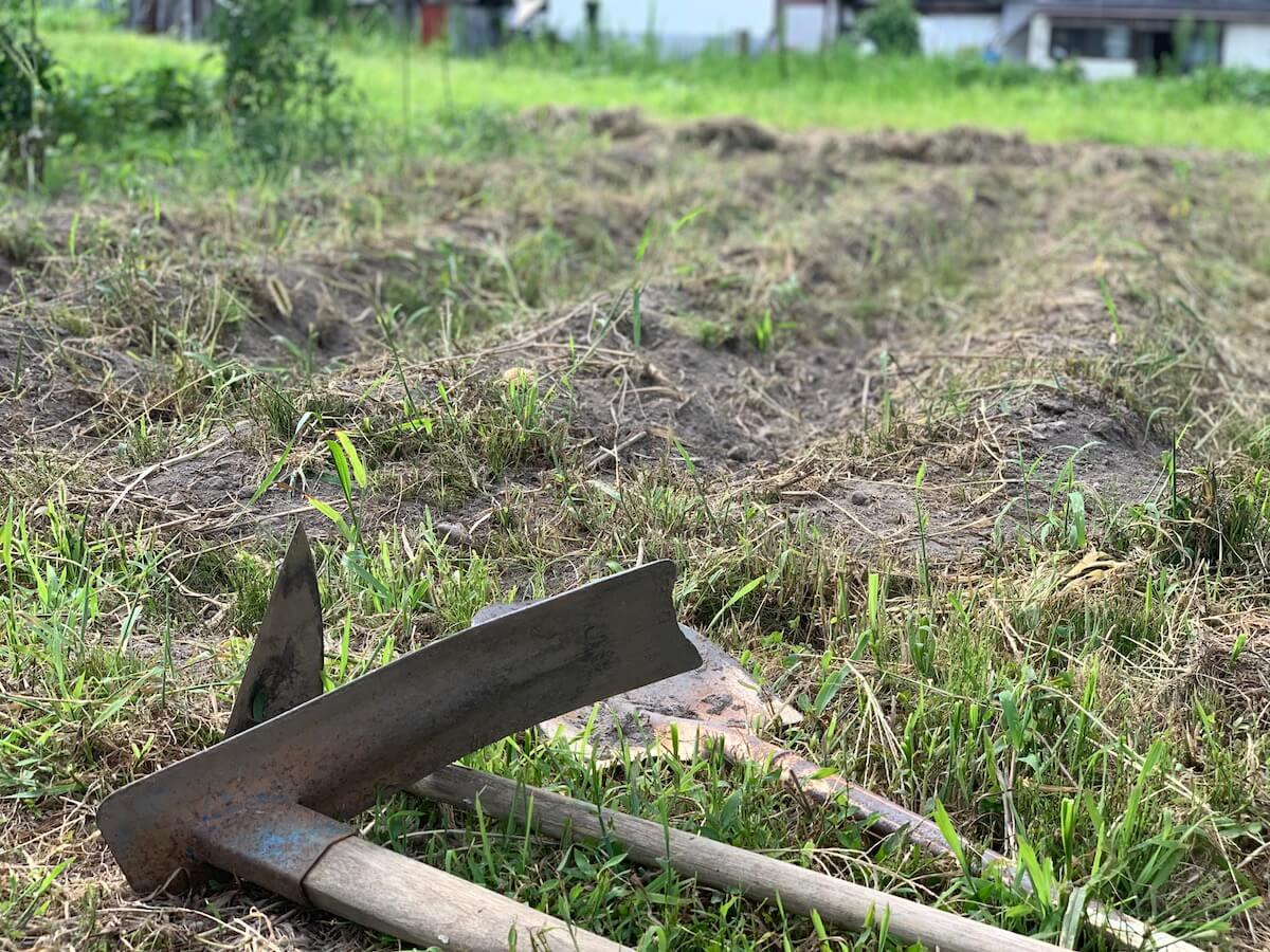 田舎でじゃがいも掘り