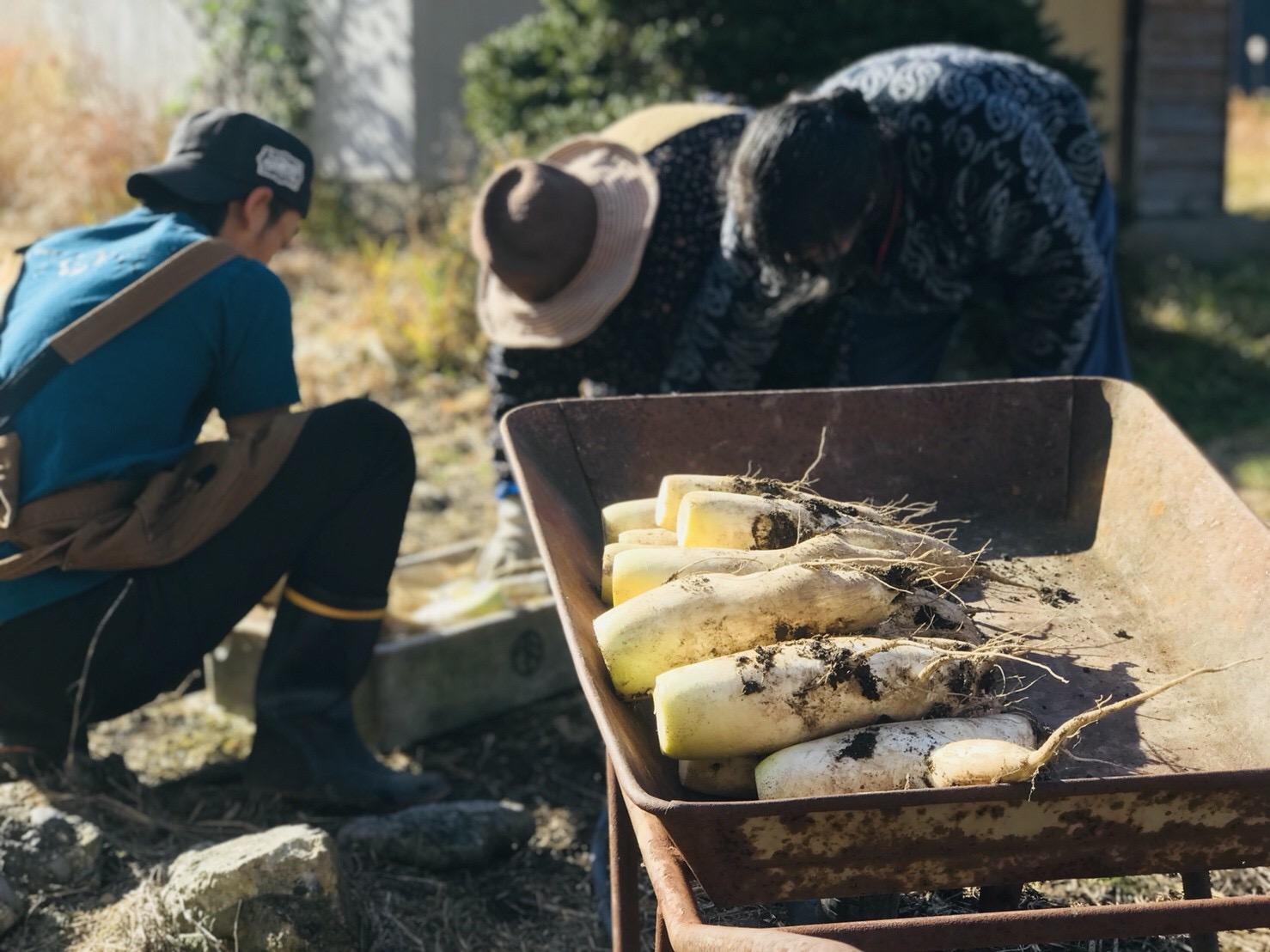 大地の恵みを感じる畑作業!あなたはどんな野菜に挑戦する?