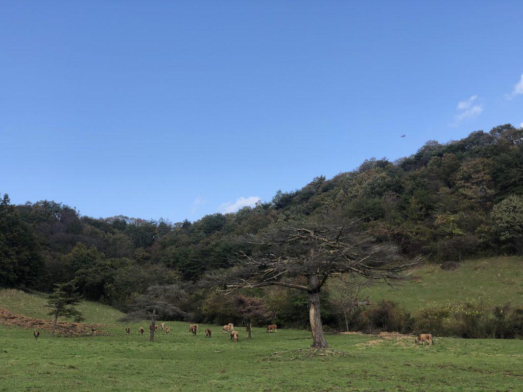 日本では希少なジャージー牛を飼育。牛も人も大切にする自然牧場に行ってみました!